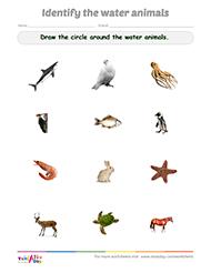 Classifying Animals Worksheet For Kindergarten - stage ...