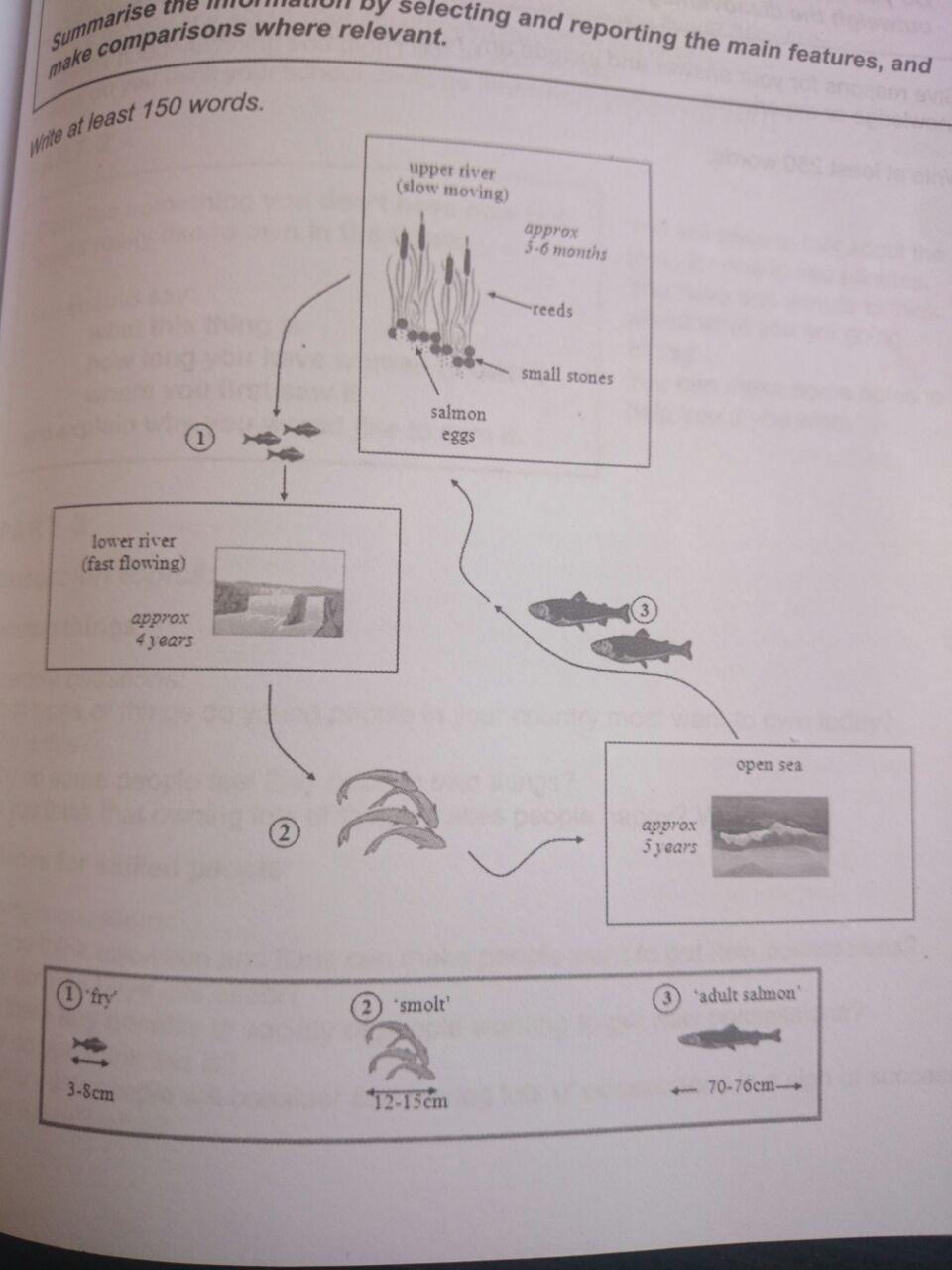 The Diagrams Below Show The Life Cycle Of A Species Of
