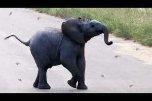 Baby Elephant Chasing Birds Melts Hearts - TexasNepal
