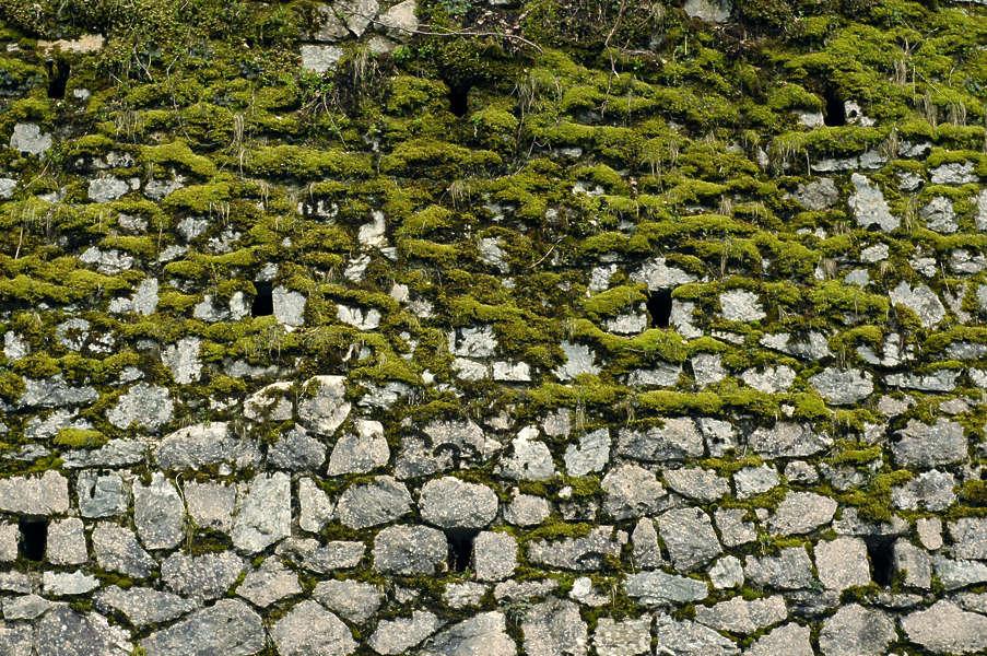 Grey Brick Wallpaper 3d Brickoldovergrown0016