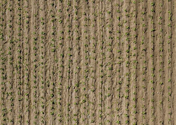farmland0025 free background texture