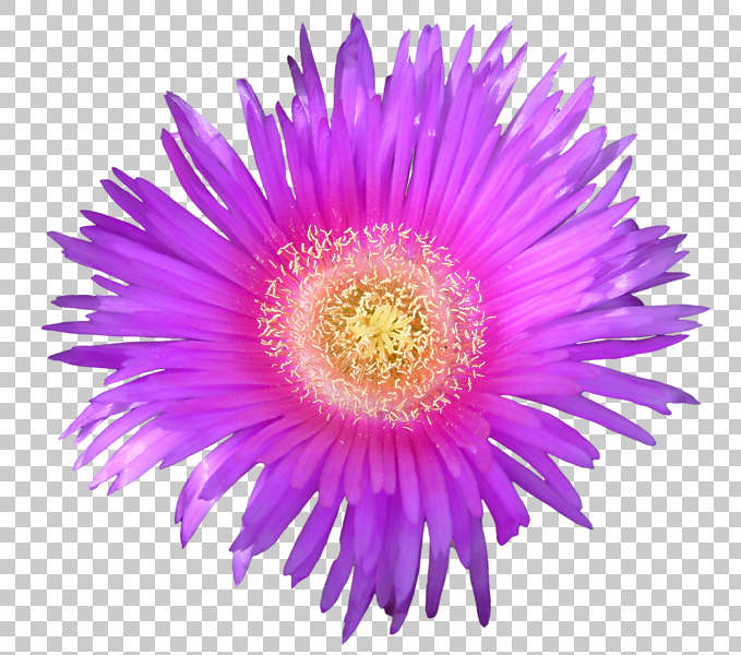 rock paper flower