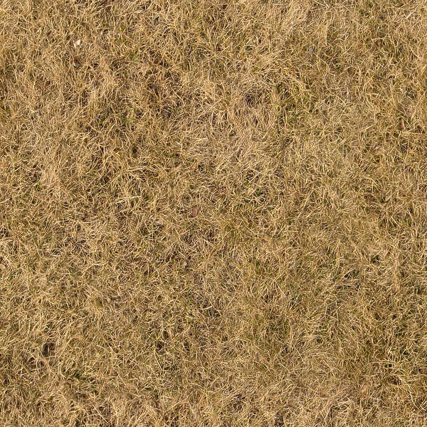 3d Roof Wallpaper Grassdead0042 Free Background Texture Grass Dead Dry