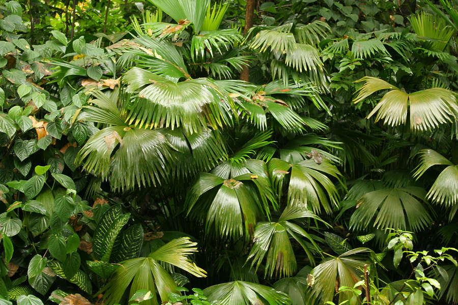 tropicalfoliage0011 free background texture