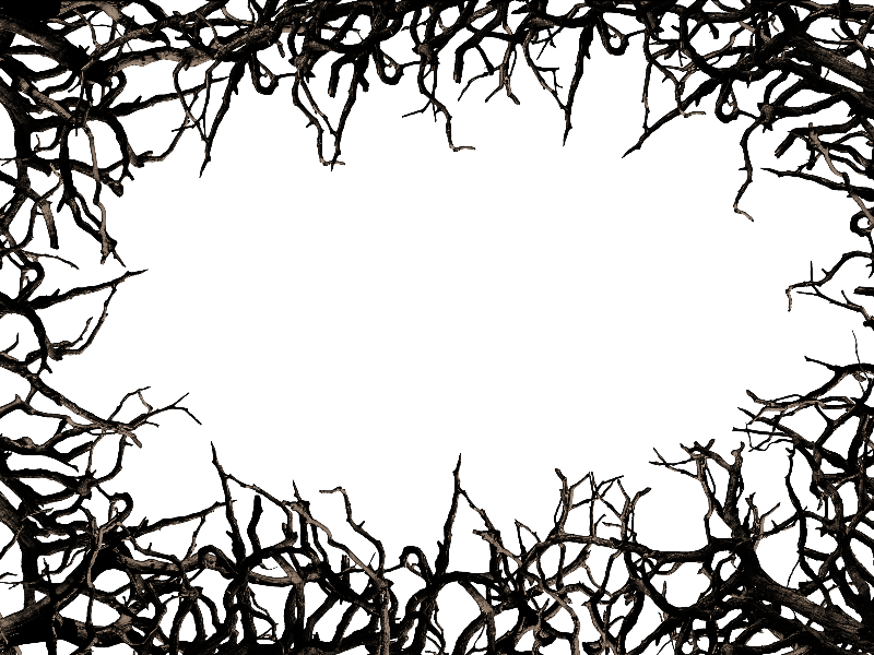 jungle background clipart border