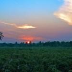 Thai Agricultural Fertilizer Funny TV ad (Video)