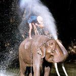 Elephant Santas cheer children in Thailand Video