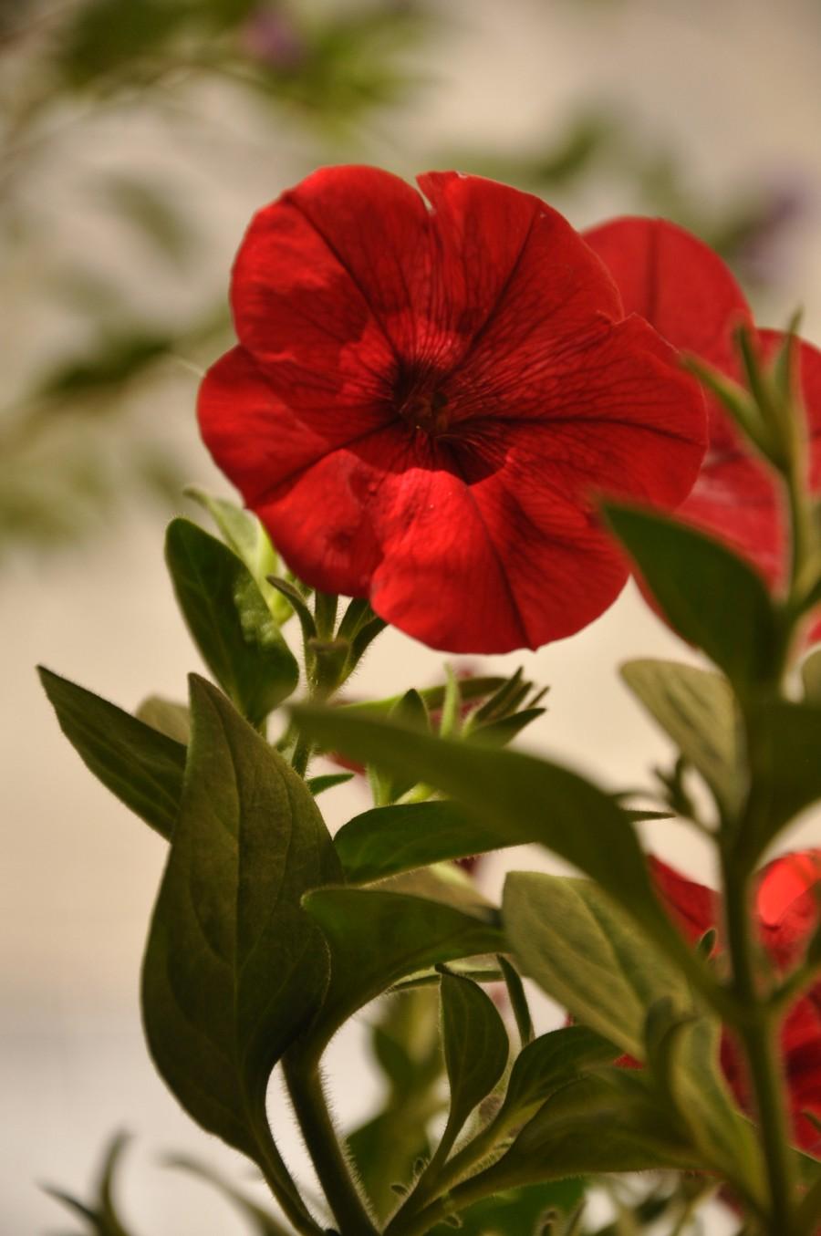 3d Free Wallpaper And Screensavers أجمل صور الورود لعام 2013