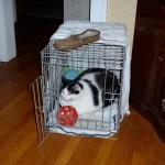 Moo takes over Princess' crate