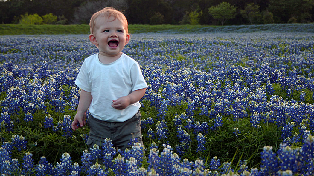 Family Photos in a Field of Texas Bluebonnets