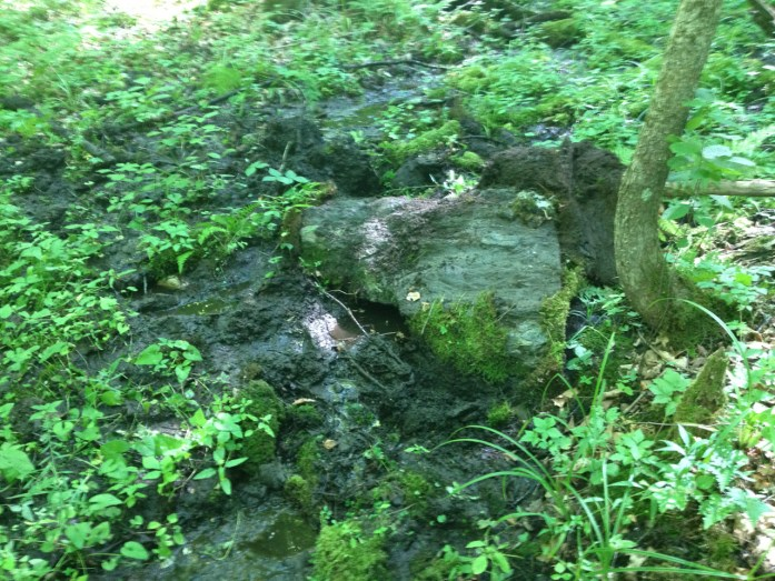 The rock — more accurately a boulder — with the moss and ferns peeled off. Collecting creek water.