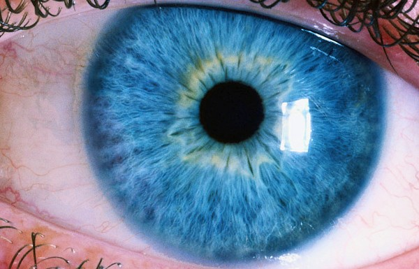3d Wallpaper Natural Beauty Iridology Works On The Theory That The Eye Particularly