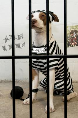 The Jail Break Artist