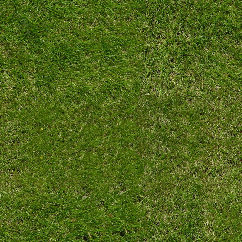 Creative Hd Wallpapers Free Download Green Grass Download Royalty Free Texture