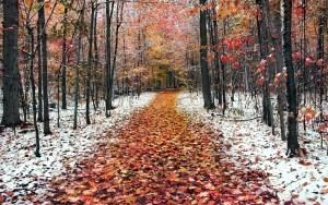 Nature___Seasons___Autumn_Late_autumn_the_first_snow_fell_043501_16
