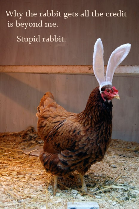 Happy Chocolate Day Quotes Wallpaper An Easter Message From Cuddles The Chicken The Art Of