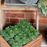 cold-frame-shelf-5