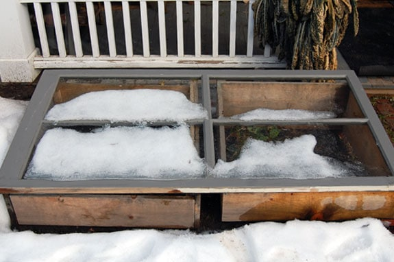 Cold Frame In Winter 1