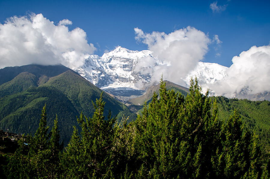 Annapurna II behind a row of pine trees.