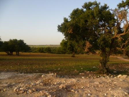 Es argan trees