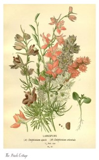 Vintage Botanical Prints and Illustrations - Where to Find ...