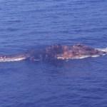 Iranian vessel found a strange creature in the Persian Gulf
