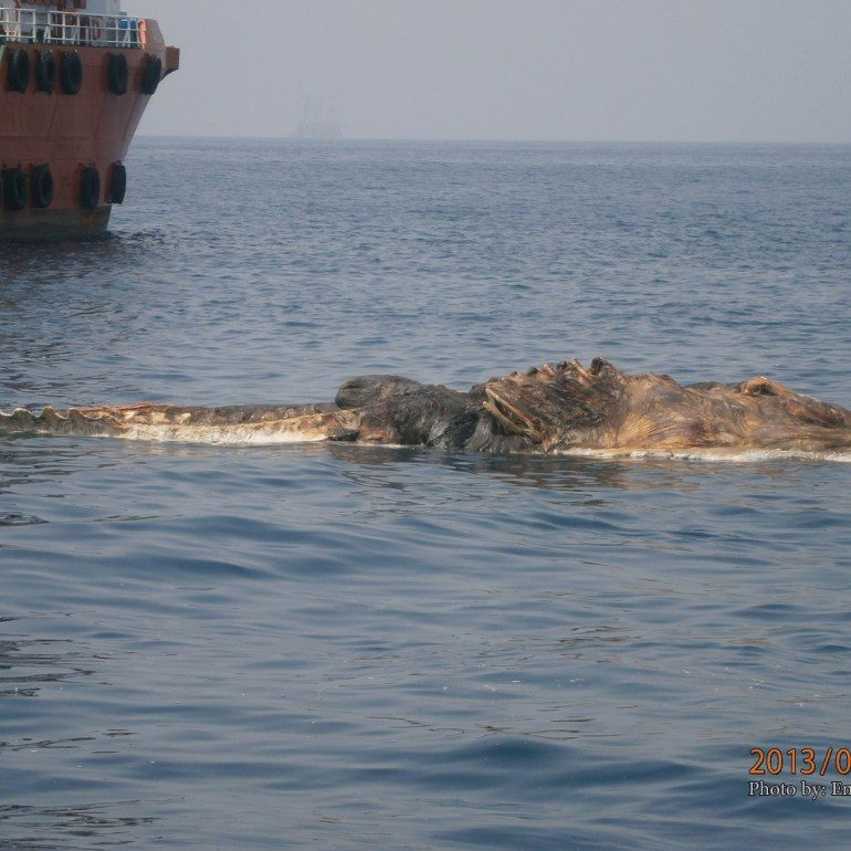 Iranian vessel found a strange creature in the Persian Gulf