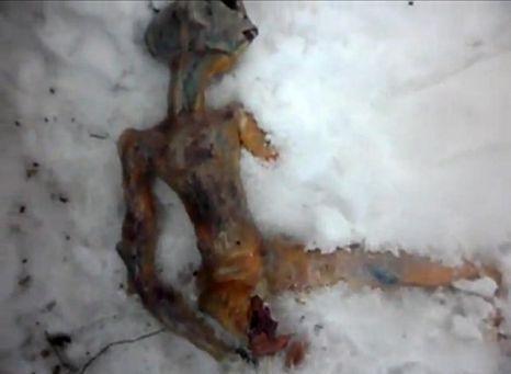 Dead 'alien' found in Siberia