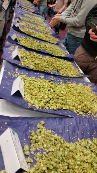 CBC: Table of German hops