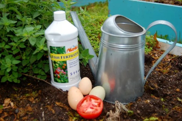 Top Tips for a HUGE tomato harvest!