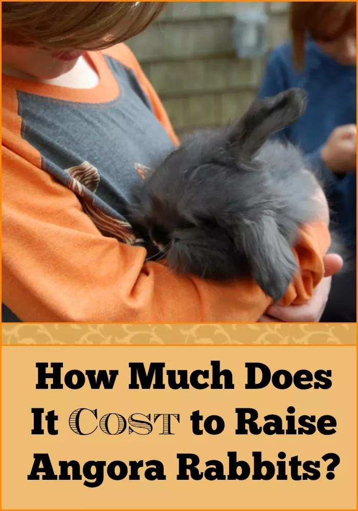 How much does it cost to raise angora rabbits for How much does it cost to build a farmhouse