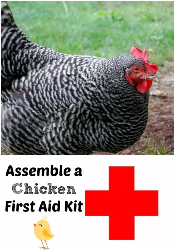 Assemble a chicken first aid kit now so you will be prepared for any emergency!