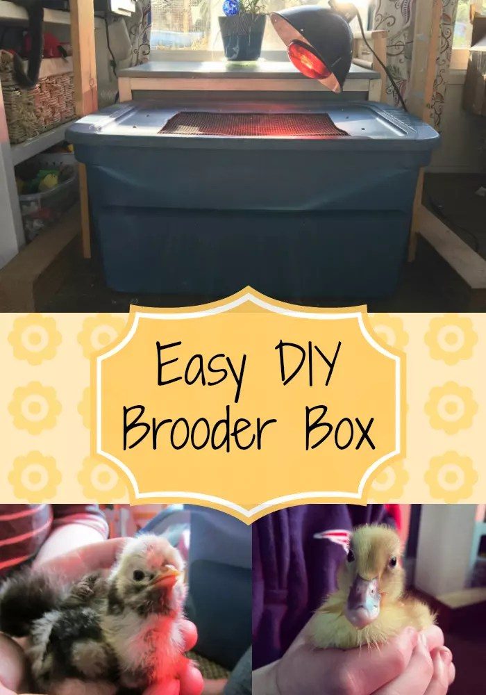 Check out this super easy DIY brooder box perfect for chicks or ducklings!