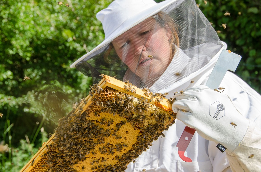 Beth inspecting the bees