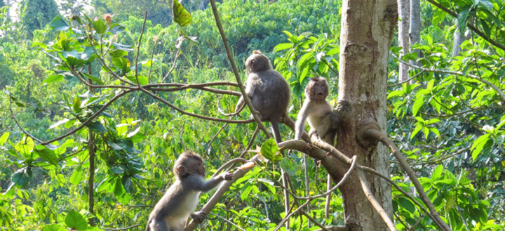 The Ultimate Guide to the Sacred Monkey Forest Sanctuary