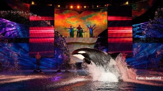 Orcas SeaWorld 1 crédito