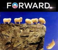 sheep forward