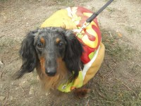 Scarecrow Festival   Dogs   Photos   Costumes   St ...