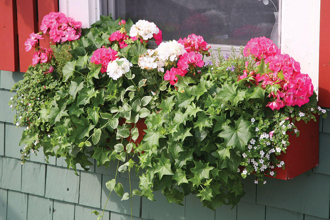 Cottage Style Window Box Ideas The Cottage Journal