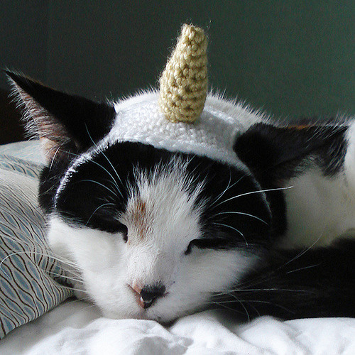 Unicorn Costume Pet Cat Dog Hat Headband by Lindsay Smith