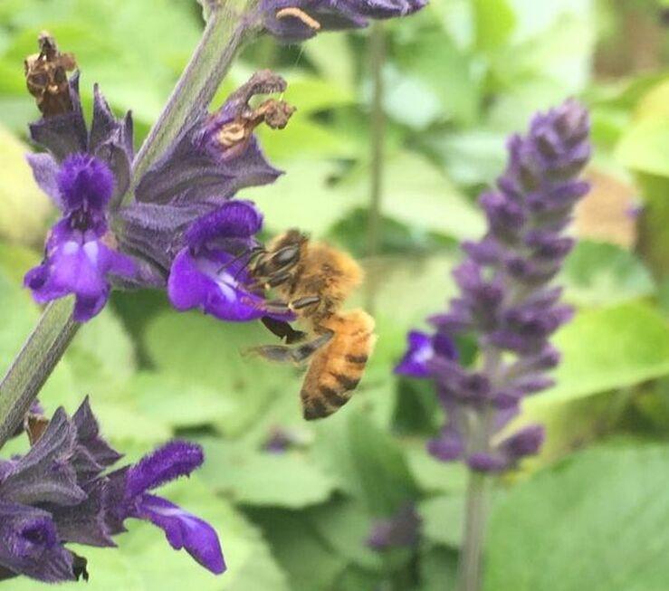 Cross Pollination the Daily Garden