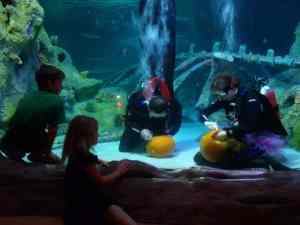 Watch Underwater Pumpkin Carving at Sea Life Aquarium Grapevine