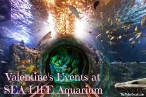 Valentine's Events at Sea Life Aquarium