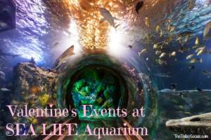 Valentine's Events at Sea Life Aquarium