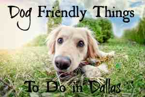 Dog Friendly Things To Do in Dallas