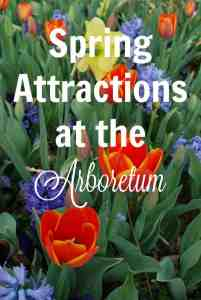 Spring Attractions at the Arboretum