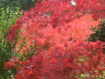 I came to Seattle at just the right time for the fall foilage.