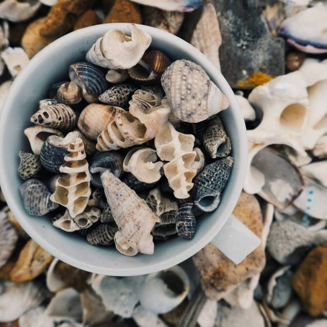 Collecting shells for a shell garden outside our bungalow athellip