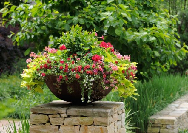 When should i replace the compost in my containers the english garden - Best compost for flower pots solutions within reach ...