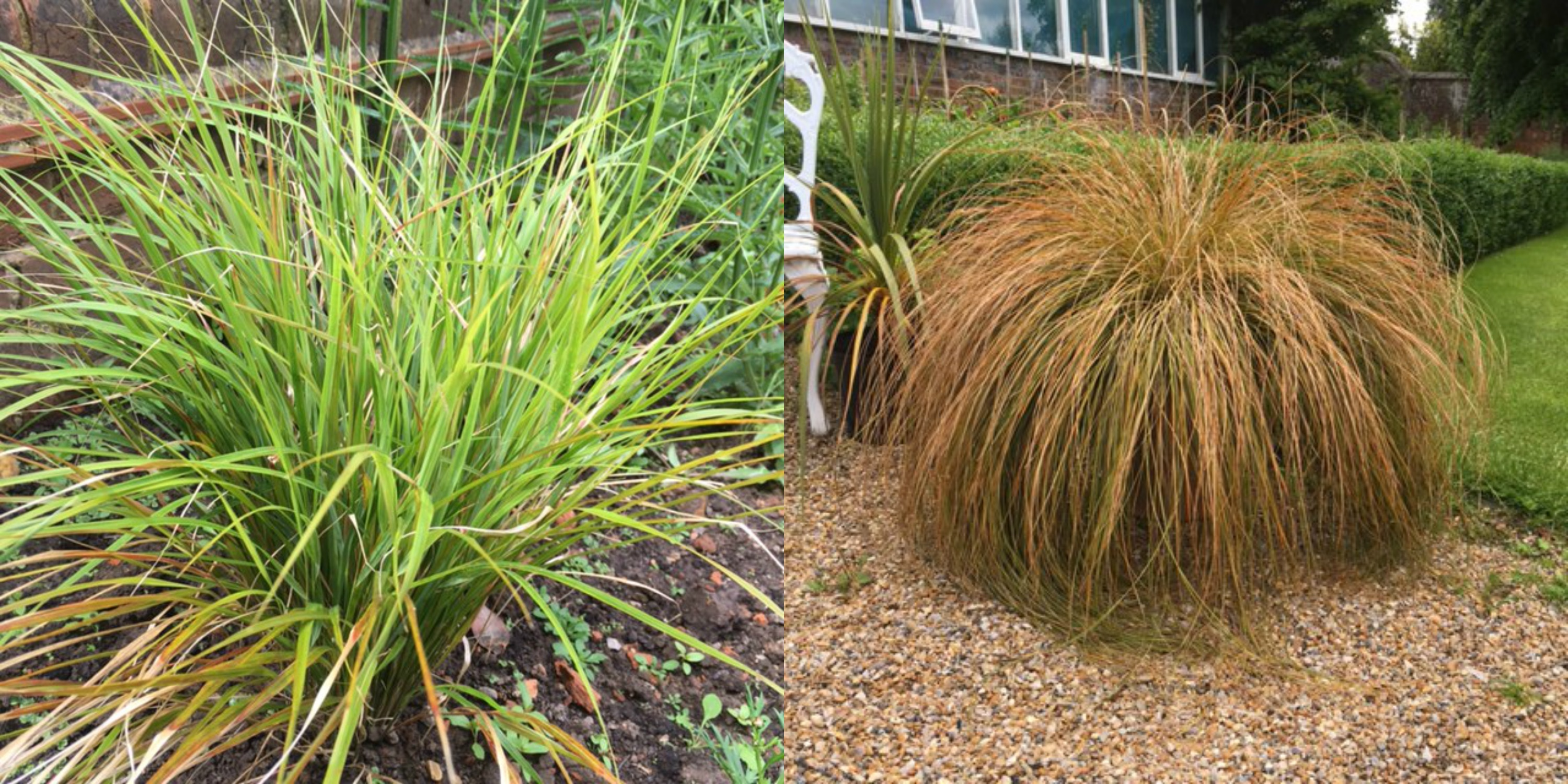 Ashdown park hotel s tips for using ornamental grasses in for Ornamental grasses in the landscape